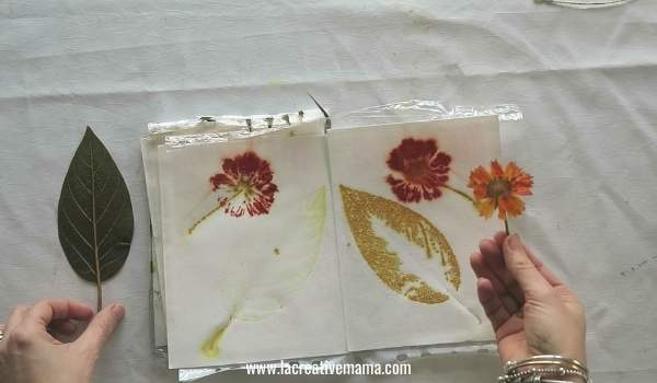 eco printing on paper using coreopsis flower and avocado leaves