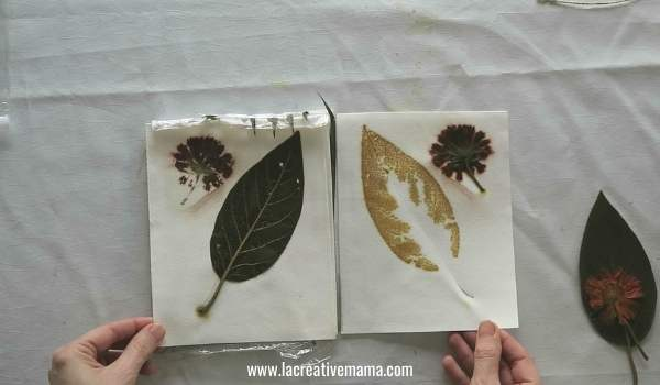 eco printing on paper using coreopsis flower and avocado leaves with ferrous sulfate