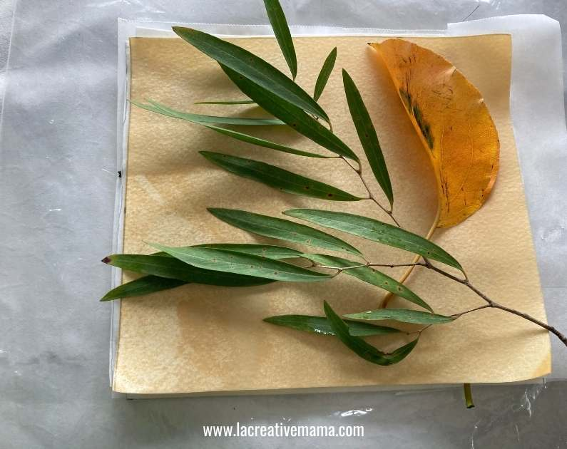 dipping leaves and paper in ferrous sulfate for eco printing on paper