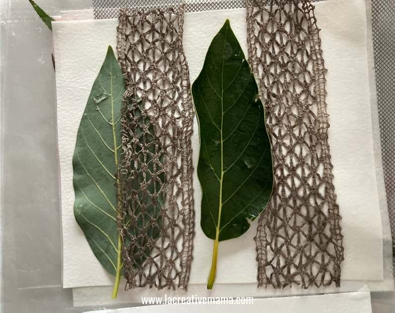 dipping texture and lace fabric r in ferrous sulfate for eco printing on paper