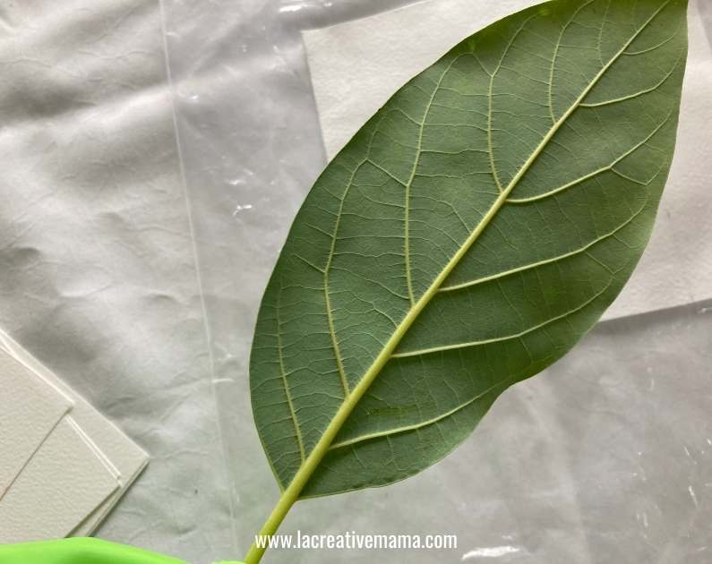 moon side of leaves for eco printing